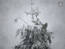 Eagle In The Blizzard by wolfwings1