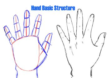 Helping Artist: Hand Basic Structure by Vesenia