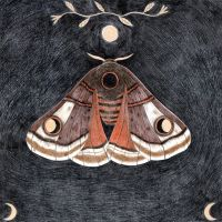 Moth, dark background by Lu-Art
