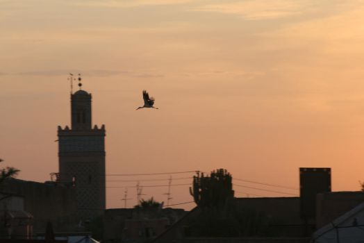 The Storks of Marrakech by etcwhatever