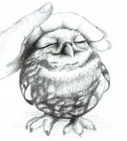 Lovely owl by Reni89
