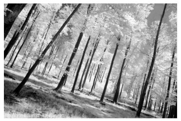 Into the forest 2 by Wundenkuessen