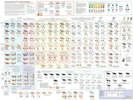 Guide to Cat Colors, Patterns by Majnouna