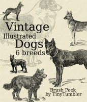 Vintage Illust. Dogs Brushpack by TinyTumbler