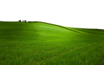 GREEN GRASS PNG - USE ANYWHERE (TRANSPARENT) by TheArtist100