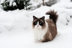 snowy Lou by awphotoart