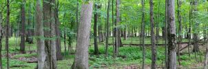 Forest Panorama by AaronMk