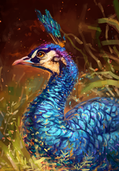 peacock by AlaxendrA