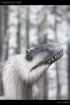 Catching Snowflakes by Julio-Lacerda