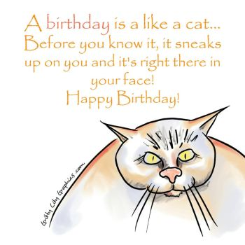 Birthday Cat  by grittycity