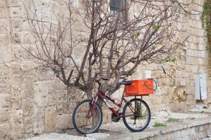 The Biketree in old Acre by Rikitza