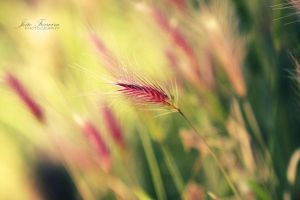 Colorful Flower by JoaoPhotography