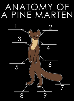 Anatomy Of A Pine Marten by artwork-tee