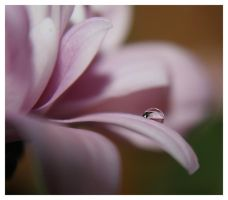 droplet 1 by mzkate