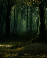WOODS STOCK BG by Moonglowlilly