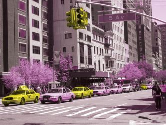 taxi rose by primafock