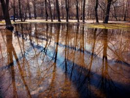 puddles by Nukta