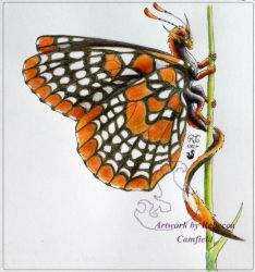Baltimore Checkerspot by chaosia
