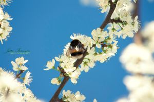 Bright bee by JoaoPhotography