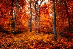 Red forest ~ STOCK by AStoKo by AStoKo