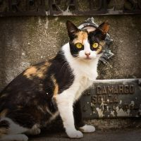 cemetery cat 9 by poivre