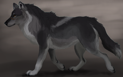 Greyback by savage