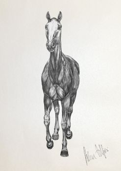 Horse's Muscles by SilviasDesires