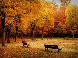 Autumn in the park by fahhhhh