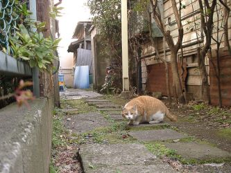 Cat in Japan:Cat on street 19 by iguru71