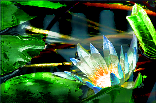 Water Lilly by vjbisme