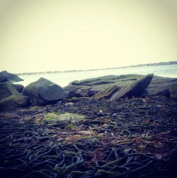 Seaweed by evilpixie21083