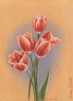 Tulips by diana-0421