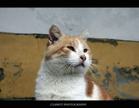 Homeless cat 2 by ClairutPhotography