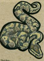ACEO 2015 - Ball Python by M-Everham