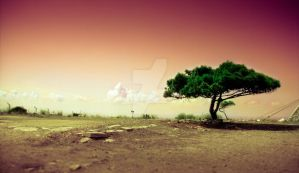 Lonely Tree by kiwikruemel