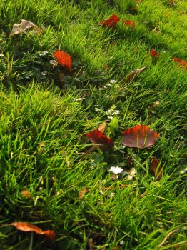 autumn meadow by Lilienmeer