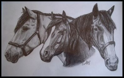 The Trio by EquineArtist-Fanatic