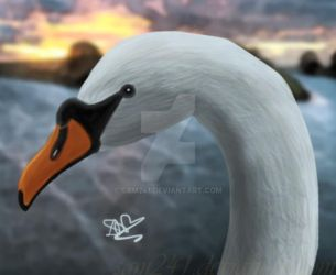Swan portrait by sam241