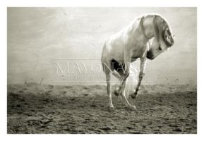 Horse - 5 by mayonaise1980