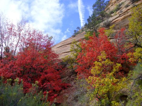 Autumn in Zion by AndySerrano