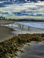 Pipers on the Beach by Photodeb