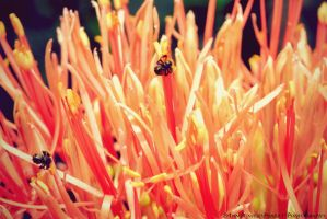Busy as a Bee by yunisuchan