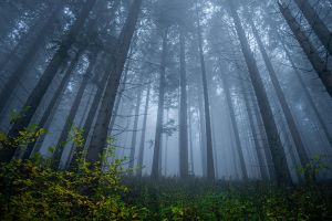 Misty forest. by jacekson