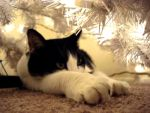 camouflage christmas by schmetterling