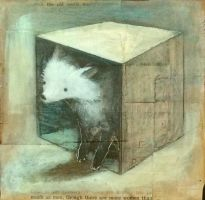 White Fox in an old Box by SethFitts