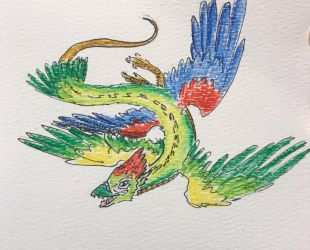 Parrot dragon  by NycterisA