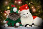 Christmas Cats by fornacon