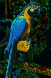 Parrot by demida1984