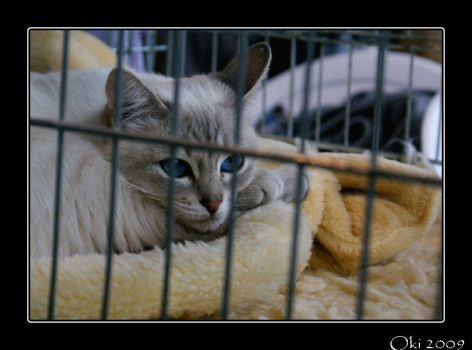 Cats' exhibition 01 by Oki666