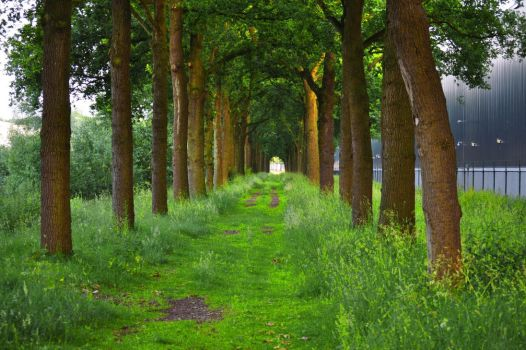 Forest path in industrial area by JNW-Art